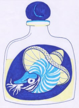 Bottle with sombrero and nautilus